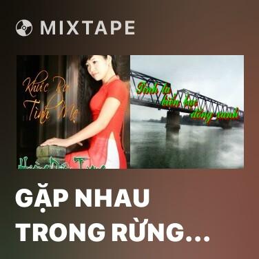 Mixtape Gặp Nhau Trong Rừng Mơ - Various Artists