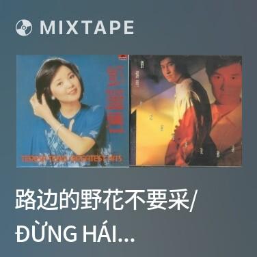 Radio 路边的野花不要采/ Đừng Hái Hoa Dại Ven Đường - Various Artists